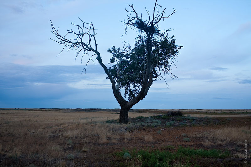 Дерево в Житкуре с гнездом из проволоки