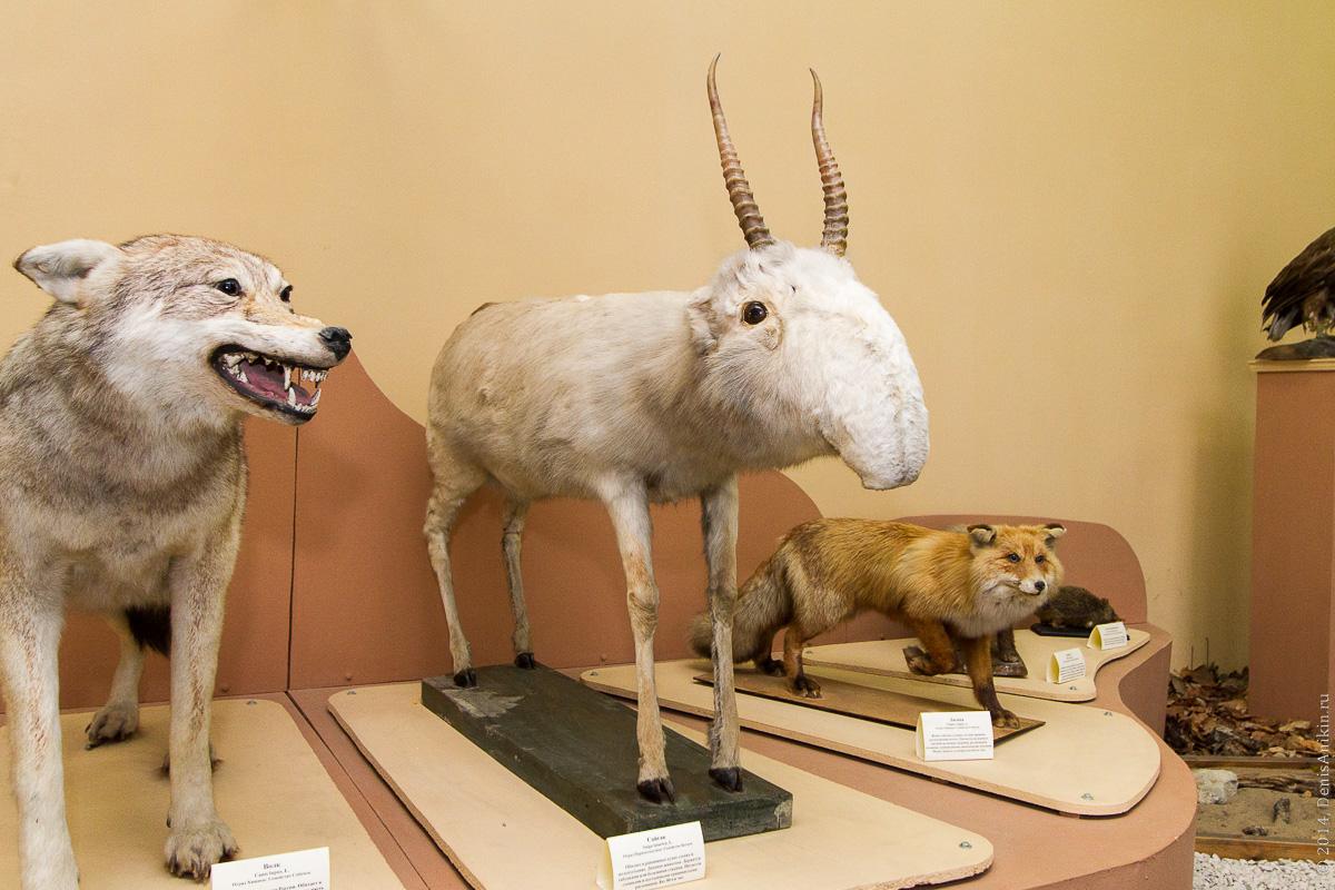Экскурсия в Энгельсский краеведческий музей фото 7