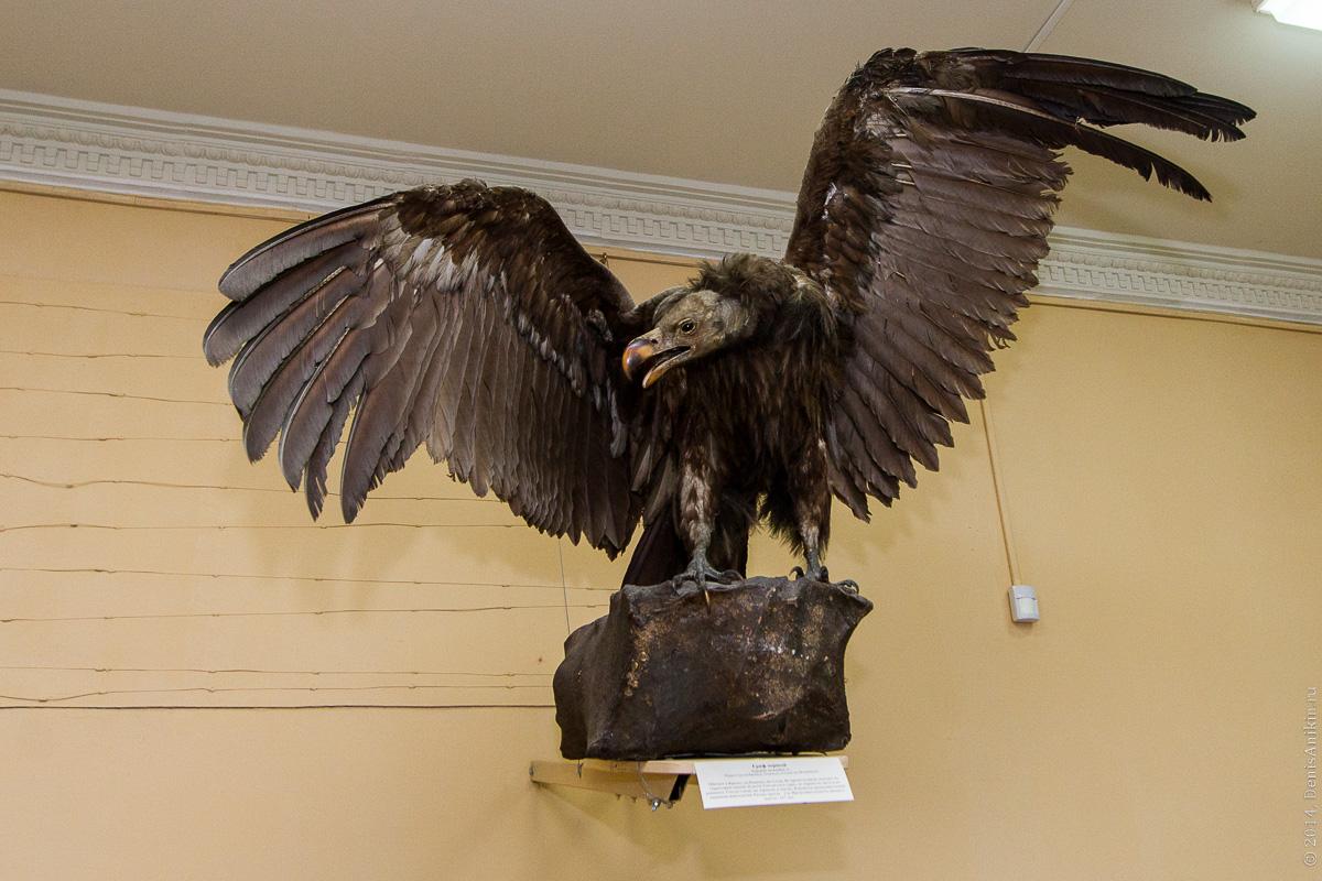 Экскурсия в Энгельсский краеведческий музей фото 8