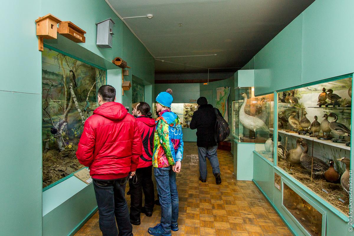 Отдел природы хвалынского краеведческого музея 5
