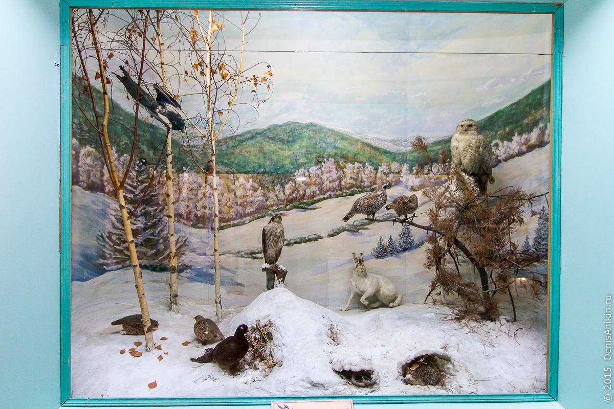Отдел природы хвалынского краеведческого музея 6