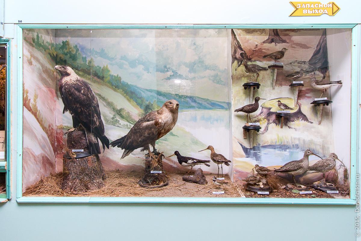 Отдел природы хвалынского краеведческого музея 7