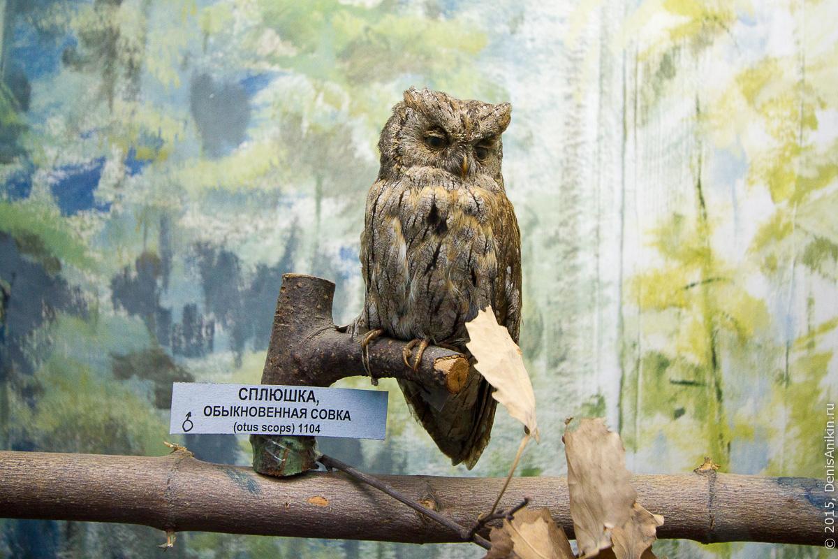 Отдел природы хвалынского краеведческого музея 9