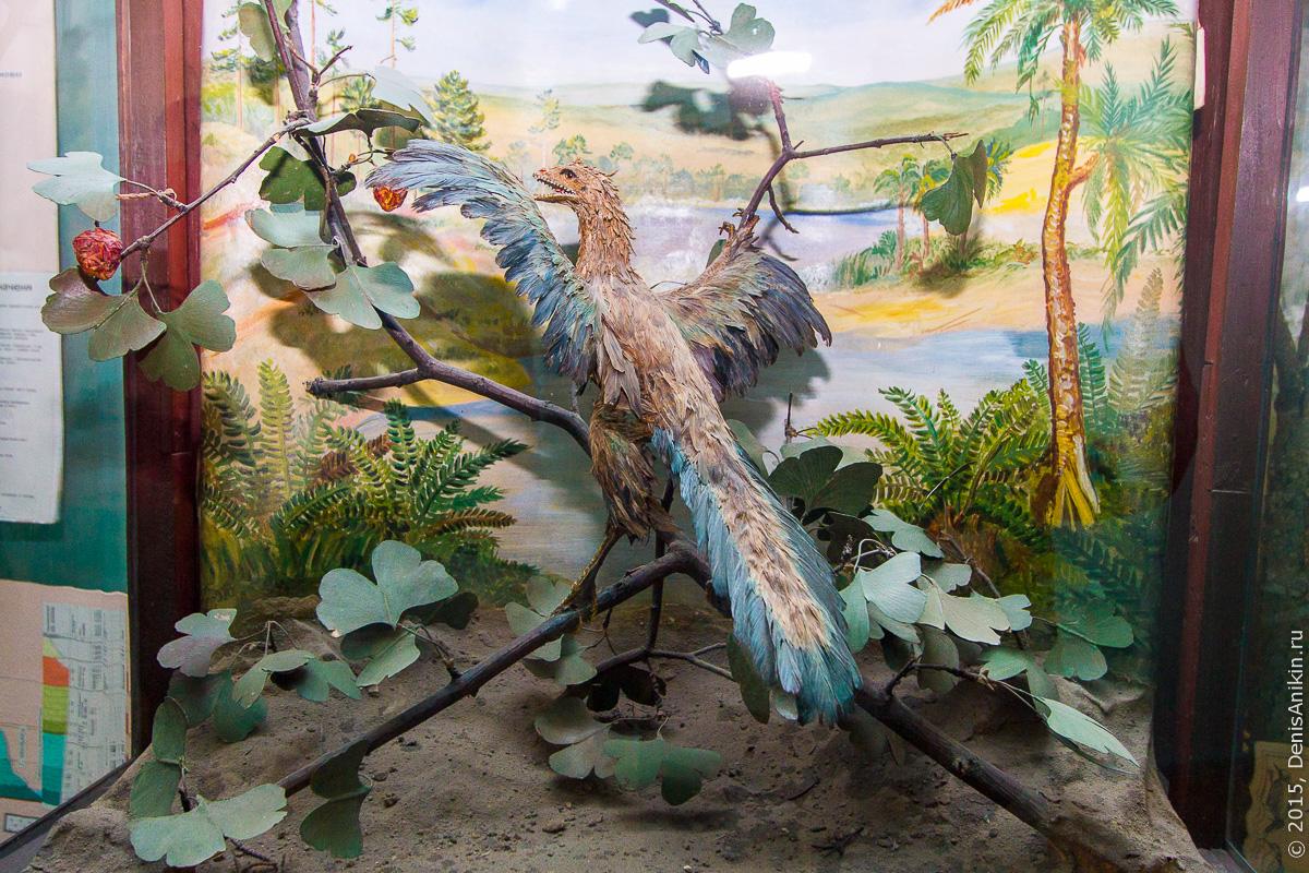 Отдел природы хвалынского краеведческого музея 11